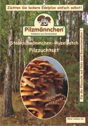 Stockschwämmchen Pilzbrut