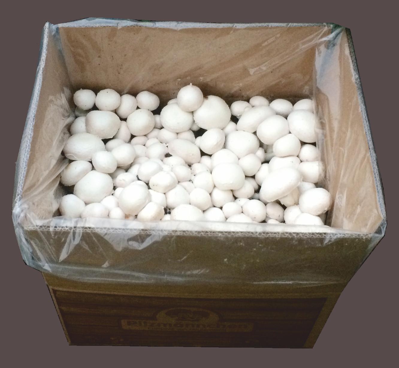 champignonzucht sets pilze selber z chten. Black Bedroom Furniture Sets. Home Design Ideas