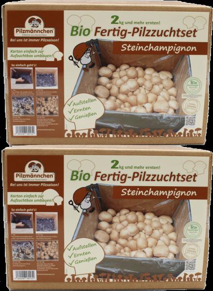 Steinchampignonbox im Set erhältlich