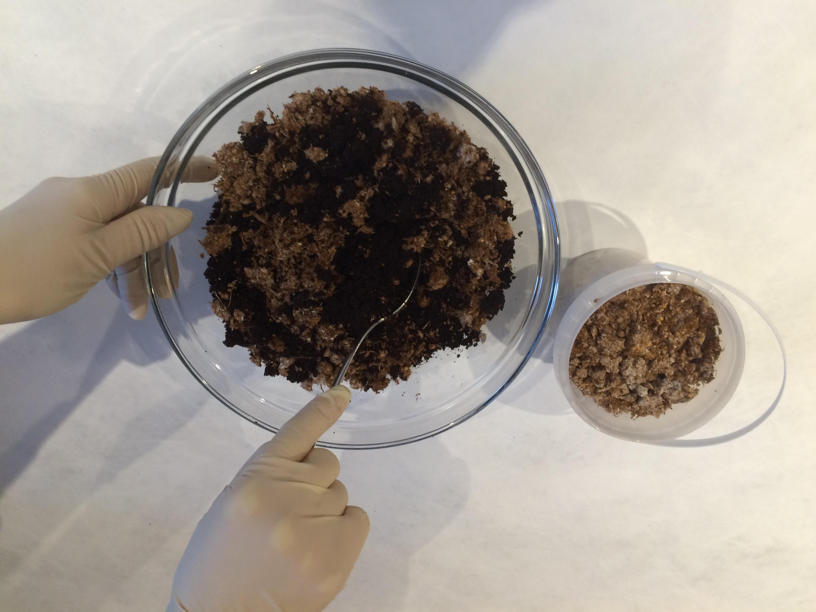 pilze auf kaffeesatz selbst z chten mit unserem kaffeesatz pilzzucht set von pilzm nnchen. Black Bedroom Furniture Sets. Home Design Ideas