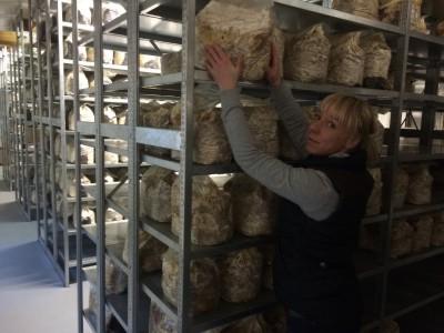 Mitarbeiter im Pilzkulturen Durchwachsraum